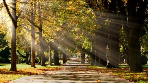 Nature Ecology Environment Fall Season Background