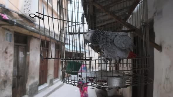 Perroquet gris africain dans une cage dans une rue sale à Stone Town Zanzibar Afrique