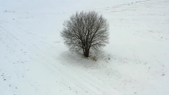 Flying around one tree in a snowy field in winter time