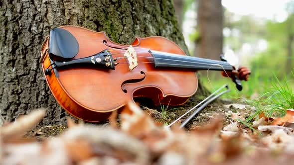 Thumbnail for Camera Focus Dry Leaves and Violin By the Tree in the Forest - Blend