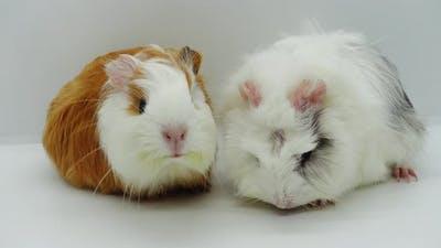 Pets Animals