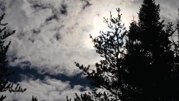 Thumbnail for Silhouette Of Evergreen Trees With The Sun Coming Through A Cloudy Sky 3