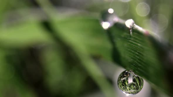 Thumbnail for Macro Film of a Dew Drop on Blade of Grass