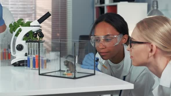 Thumbnail for Two Multiracial Female Scientists Showing Amazement During Providing Experiment with Lab Hamster