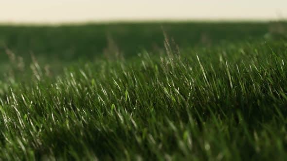 Green Fresh Grass As a Nice Background
