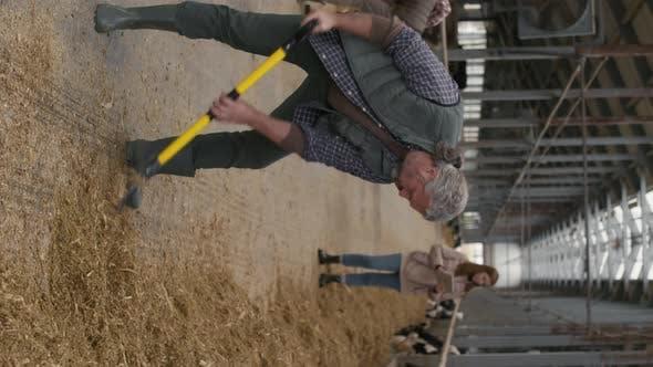 Vertical Shot of Man Shoveling Hay at Cattle Farm