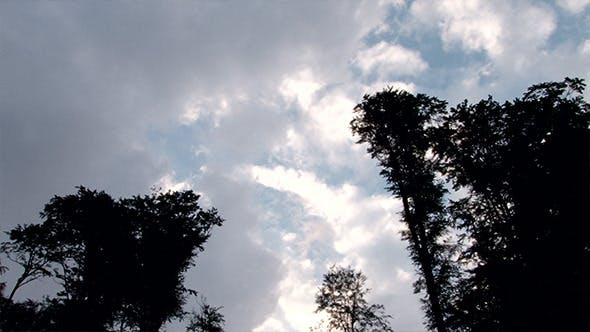 Thumbnail for Clouds Over Tall Trees