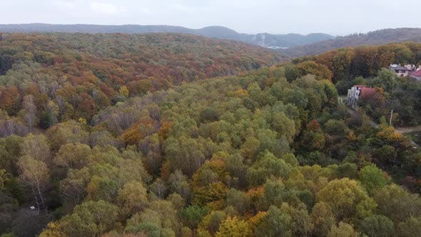Thumbnail for Drone Flying Over the Forest 2