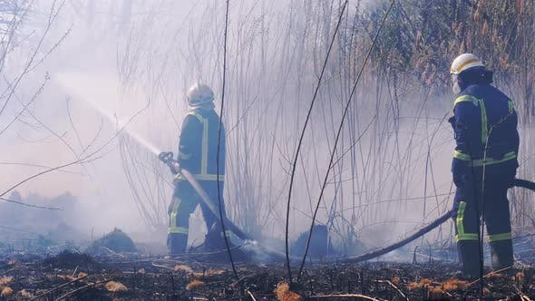 Two Firefighters in Equipment Extinguish Forest Fire with Fire Hose. Slow Motion