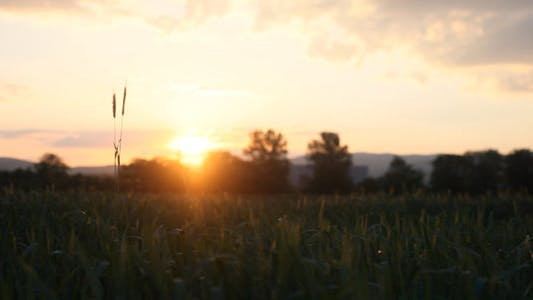 Thumbnail for Sunset On The Field 2