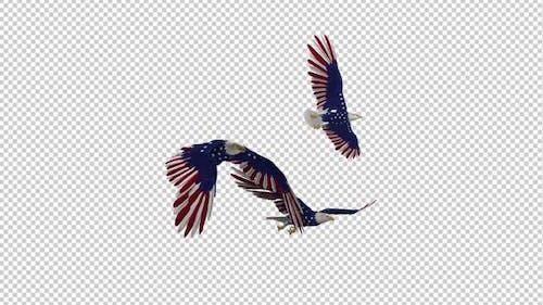 USA Eagles - 3 Birds - Flying Loop - Side Angle