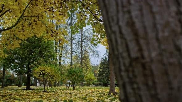 Beautiful Nature in Autumn Park