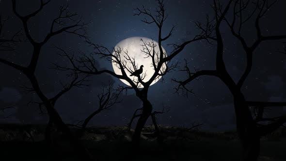 Thumbnail for Scary Tree At Night