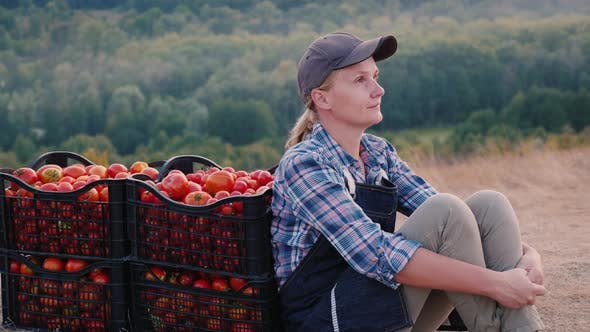 Thumbnail for Woman Farmer Resting After Work, Sitting Near Boxes with Tomatoes