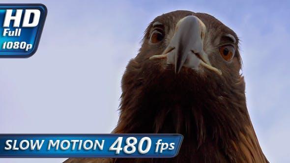 Thumbnail for Predator Hunting