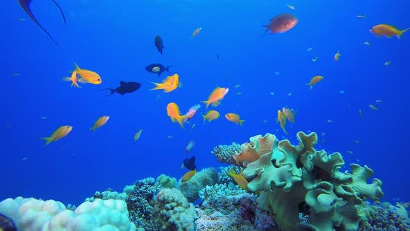 Unterwasser-schöne Szene