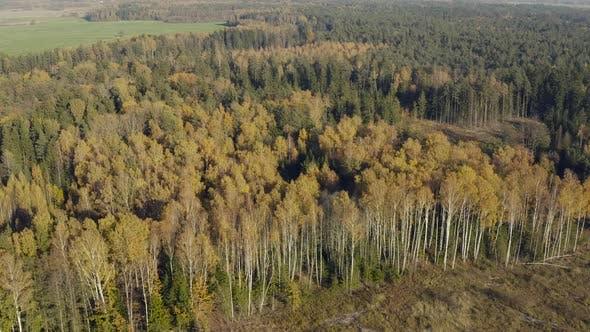 Devastated Forest, Panorama of Deforestation