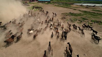 Animals Running Horses