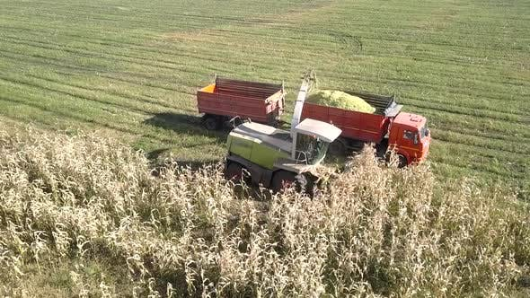 Thumbnail for Silage Harvester Gathers Corn Stems Pours Mass Into Truck