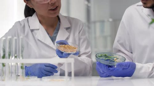 Scientists Inspecting Genetically Modified Plant Seeds