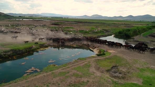 Thumbnail for Herd Horse 5