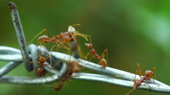 ants carrying food on the wire r