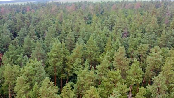 Thumbnail for Green dense forest
