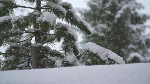 Thumbnail for Schnee schneit auf einem Baum im Winter.