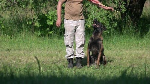 Der Hund wiederholt die Bewegungen seines Besitzers.