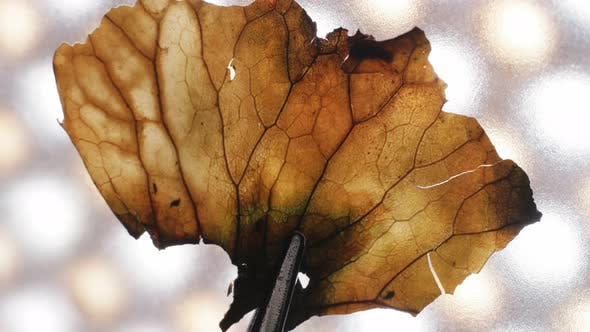 Thumbnail for Dry Leaf Inspection