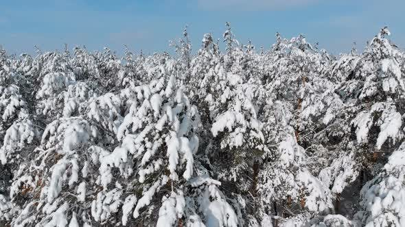 Thumbnail for Flying Over a Snowy Winter Forest on a Sunny Day
