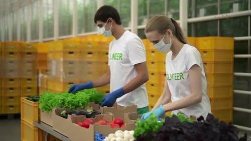 Mann und Frau packen frisches Gemüse, während sie Agro Company Drinnen Standen
