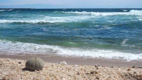 Thumbnail for White Sand Beach Waves