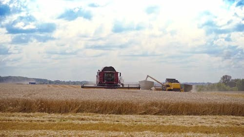 Agricultural machinery at seasonal works. Big combine harvester gathers wheat crop