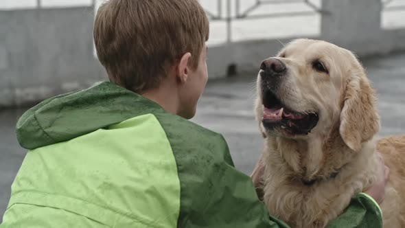 Cover Image for Affectionate Labrador Dog Loving his Owner