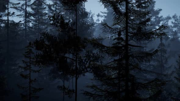 Thumbnail for Misty Nordic Forest Early Morning Fog