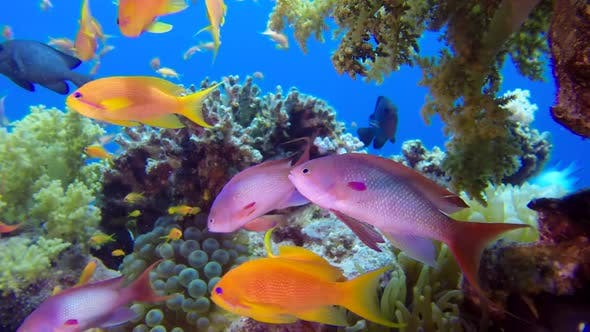 Thumbnail for Underwater Close Up Colorful Tropical Fishes