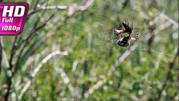 Thumbnail for Spider Hunting