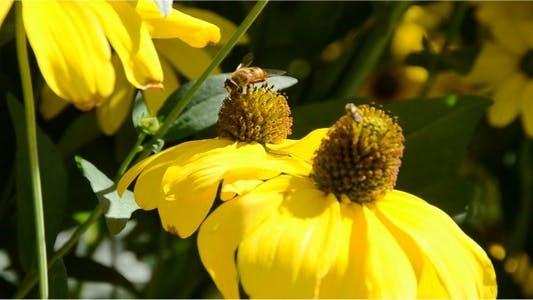 Bumblebee 8