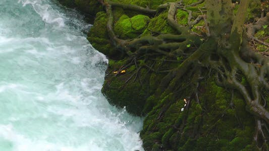 Mossy Tree And The Water