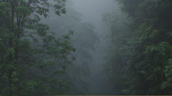 Thumbnail for Dark Fog On Forest
