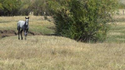 A horse running across field