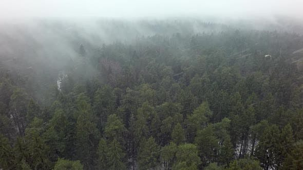 Thumbnail for Aerial Winter View of Conifer Woodland in Snowfall
