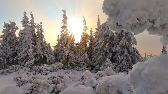 Thumbnail for Gefrorener Winterwald