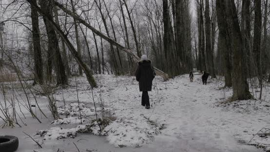Thumbnail for Woman and Stray Dogs in Winter Park
