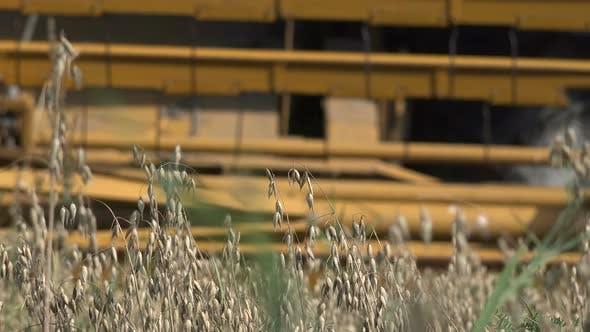Thumbnail for Harvesting Oat Crop