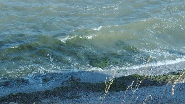 Thumbnail for Seaweed on Shore