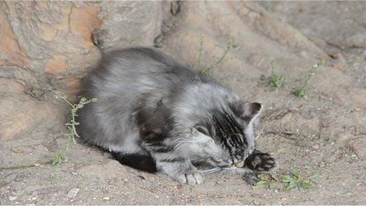 Thumbnail for Kittens 5