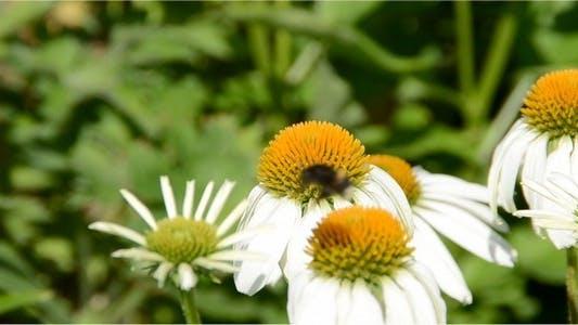 Bumblebee 6