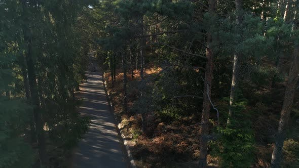 Thumbnail for Car Crossing Forest Road